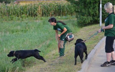 Foto z výcviku s Ebinkou a Justýnkou