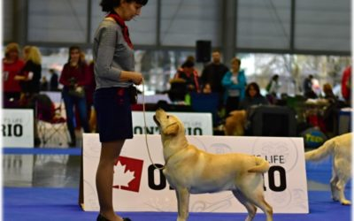 Hanácká národní výstava psů Brno